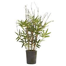 best 25 trees in pots ideas on potted trees zinc