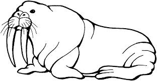 free walrus coloring pages clipart wikiclipart