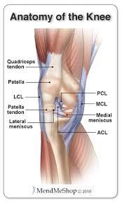 Knee Anatomy Pics Mendmyknee Com Anatomy Of The Knee Tibiofemoral Joint