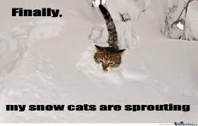 Grumpy Cat Snow Meme - finally my snow cats are sprouting by serkan meme center