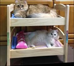 Cat Bunk Bed The Ikea Cat Bed