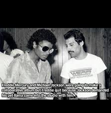 Freddie Mercury Meme - freddie mercury and michael jackson what is possibly better