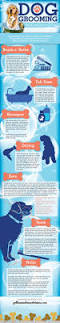 best 25 dog care ideas on pinterest dog care tips puppy care