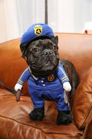 Frenchie Halloween Costume Bunch Dogs Cats Hilarious Halloween Costumes Happy