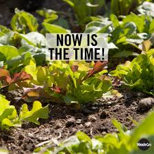 get growing plant now for a fall harvest vegetable gardening