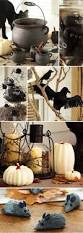 best 25 pottery barn halloween ideas on pinterest halloween diy