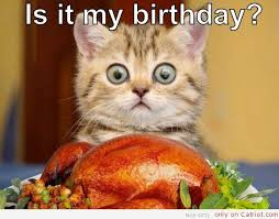 happy birthday lol cat happy birthday chicken and kitten