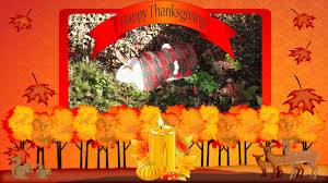 speedy the cheeky house bunny happy thanksgiving to my friends