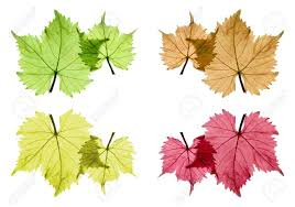 White Flag With Green Leaves Leaf Transparent Images U0026 Stock Pictures Royalty Free Leaf