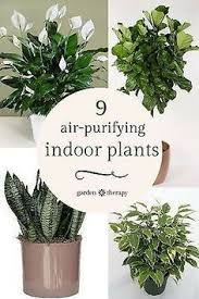 Best Plants For Bathroom 12 Best Plants That Can Grow Indoors Without Sunlight Indoor