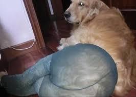 Pantyhose Meme - dogs wearing pantyhose meme 23 dump a day