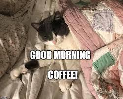 Good Morning Cat Meme - good morning imgflip