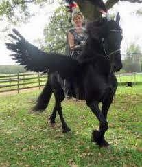Funny Halloween Animal Costumes Awesome Horse Costumes Horses Horse