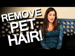 How To Remove Dog Hair From Car Upholstery 4 Ways To Remove Pet Hair Wikihow