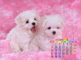 cute dog wallpapers wallpapers of cute dogs 87