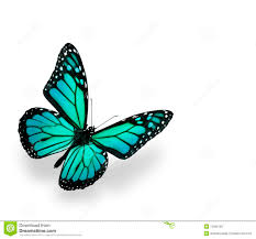 Blue And Green Butterfly - blue green butterfly isolated on white stock photo image 12392100