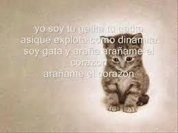 imagenes de gatitos sin frases yo soy tu gatita la factoria letras com