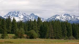 wallpaper landscape trees cool pine high mountain desktop