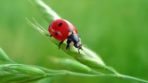 ladybug wallpapers hd backgrounds wallpapersin4k net