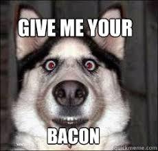 Dog Bacon Meme - give me your bacon bacon dog quickmeme