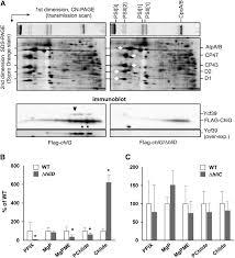 Anti Flag Affinity Gel A Cyanobacterial Chlorophyll Synthase Hlid Complex Associates With