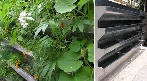 vertical vegetable garden rises in style urban gardens