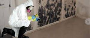 tucson mold inspection removal steamy concepts