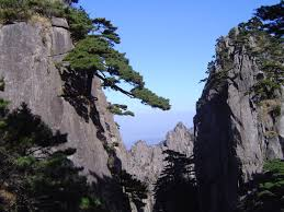 of china tree free stock photo of green welcome tree yellow mountains in china
