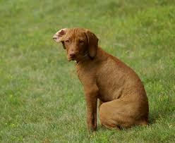 the local dog rethinking contemporary dog breeding