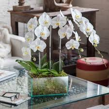 orchid arrangements orchid arrangement chrystal clear with white orchids orchid