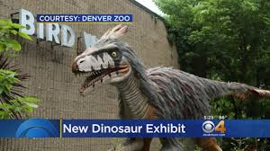Denver Zoo Lights Coupons by Dinosaurs Invade Denver Zoo Youtube