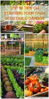 garden top 10 tips on starting your own 2018 update