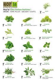 herbes pour des grillades des salades ou des sauces en