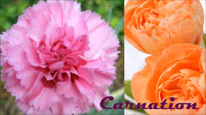 list of winter flowers part 2 in hindi youtube