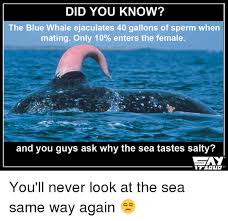 Whaling Meme - did you know the blue whale ejaculates 400 gallons of sperm when