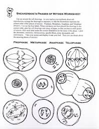 Mitosis And The Cell Cycle Worksheet The The One With Mitosis