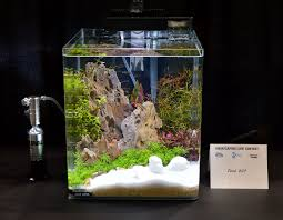 Aquascape Chicago Aquascaping Live 2016 Small Planted Tanks