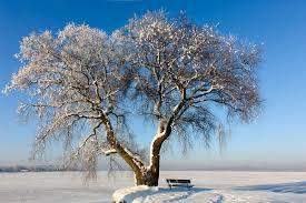 snowy tree on frozen lake ii stock photo image 34865148