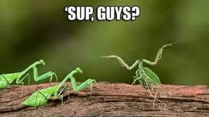 Mantis Meme - praying mantis be like owned com