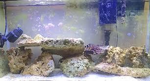 Live Rock Aquascaping Choosing Aquarium Safe Rocks