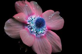 flowers images out of this planet pictures of flowers a fluorescent l