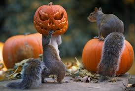 pumpkin mask for halloween now that u0027s a horror tail squirrels go nuts for halloween with