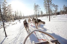 Dog Igloo Lapland U0027s Igloo Hotel At Kakslauttanen Glass Igloo Out Of