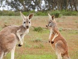 australia etiquette customs culture business guide