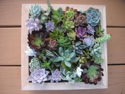 Wall Garden Kits by Succulent Wall Art Roselawnlutheran