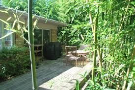 the plants you shouldn u0027t plant like bamboo species
