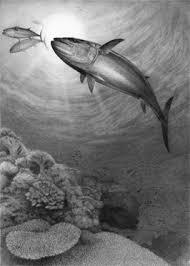 saltwater game fish