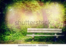 blank old wooden bench shady area stock photo 443116408 shutterstock