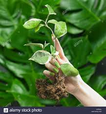 green yellow colored nails and plants stock photo royalty free
