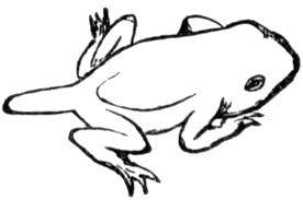 image toad artwork super mario 3d png fantendo
